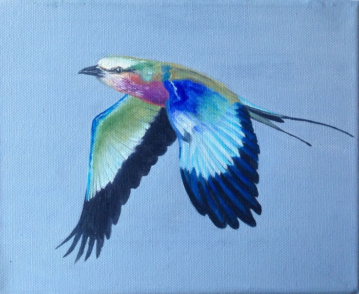 Lilac breasted roller in flight, oil on canvas