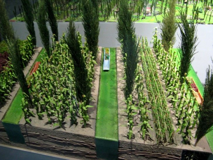 Maqueta Chinampas Acuaponía Agricultura Y Lirio De Agua