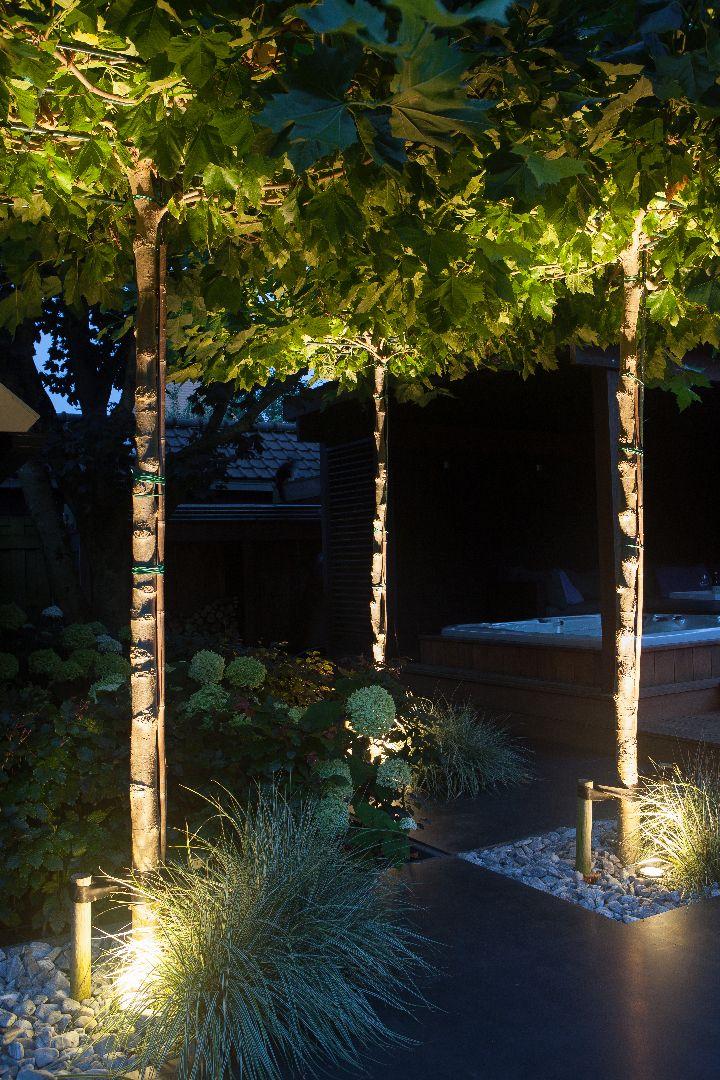 Dakplantaan | Grondspot | NERO | Bomen