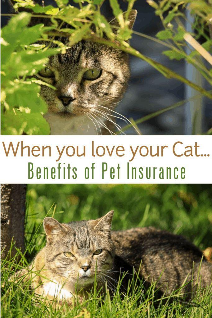 When Your Cat S Health Is Important You Deserve The Best Cat Health Best Pet Insurance Pet Insurance