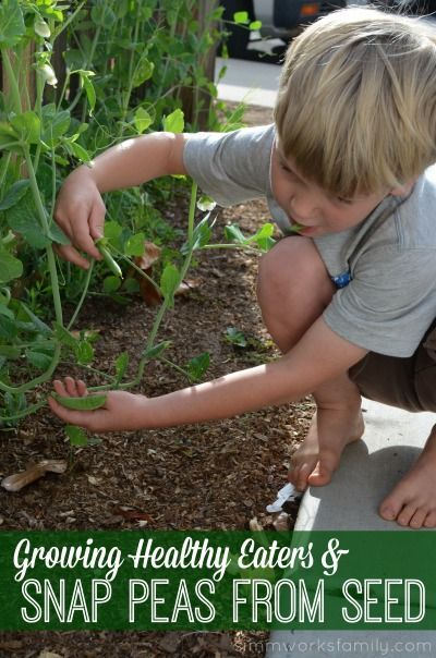 Growing Healthy Eaters and Snap Peas from Seed