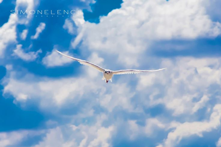 Flying In Freedom | da Simone Lenci #fly #freedom #sky #summer