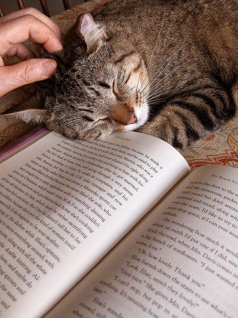 Happiness is a purring cat to pet and a book to read: