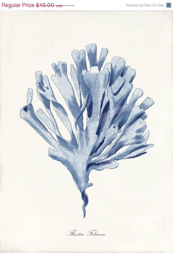 121 best algae images on pinterest plants art paintings and artworks blue coral art print 5 x 7 natural history by 1001treasures 1000 fandeluxe Gallery