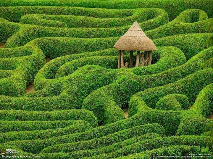 Laurel maze at Glendurgan Garden. Cornwall, England.