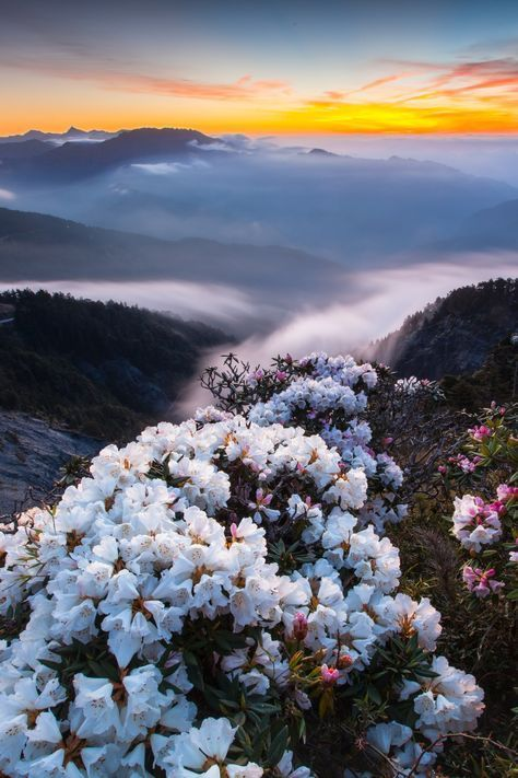 Mountain Magic in Bloom ..... by higrace on Flickr