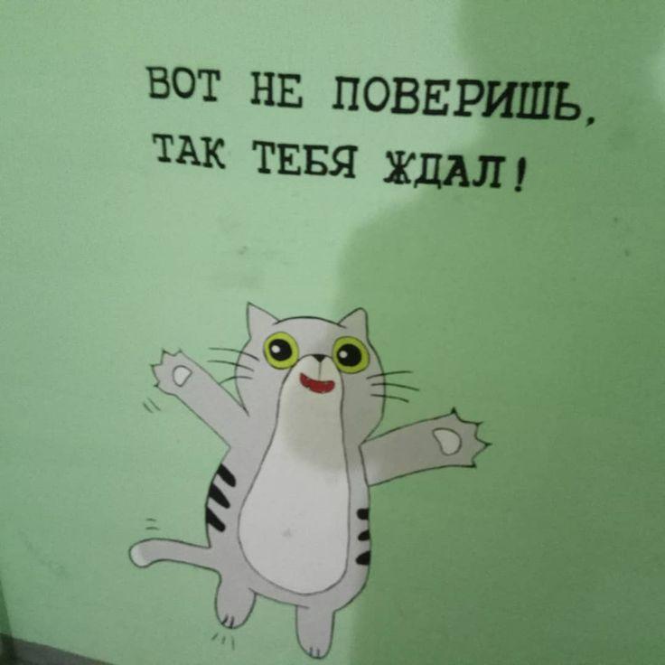 Дружелюбный котик в одном из подъездов Перми 😊