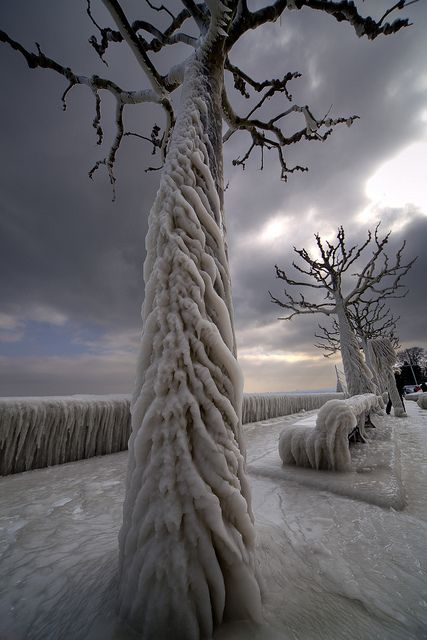Aftermath of an ice storm in Geneva, Switzerland, by James Forsyth, 2012.
