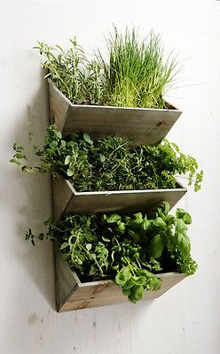 Shabby Chic Large Wall Hanging Herbs Planter Kit Wooden Kitchen Garden Indoor