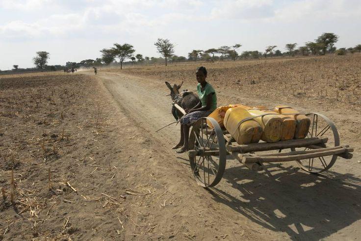 Niña oromo desplazándose al pueblo vecino en búsqueda de agua  Etiopía, la hambruna evitable Hoy ninguna emergencia alimentaria es producida sólo por una sequía. Las causas son políticas y económicas, y evitables