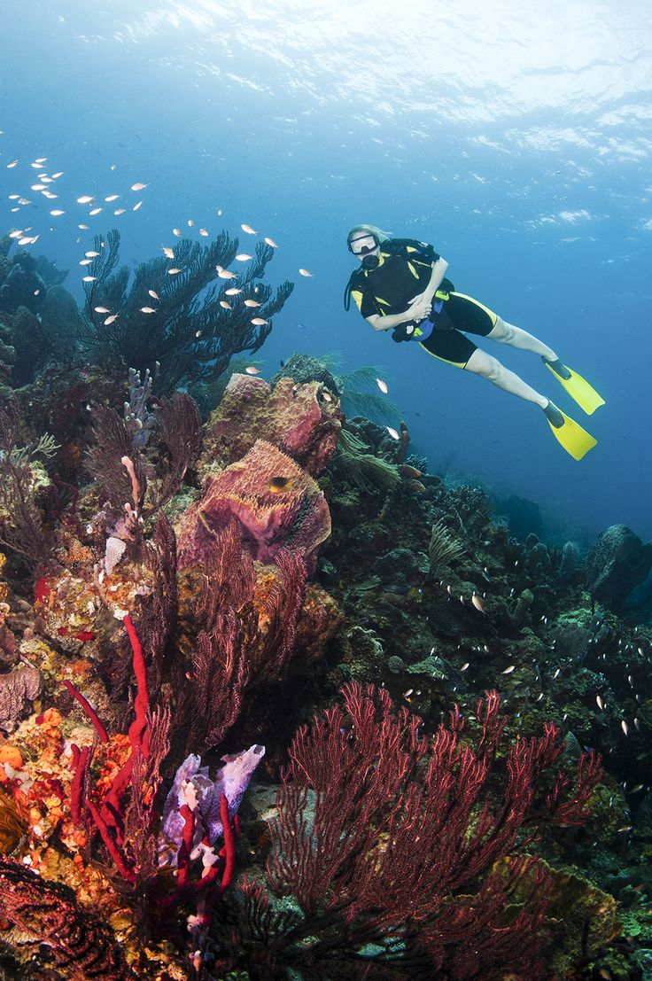 St. Lucia is home to vibrant coral reefs © James + Courtney Forte / Getty Images