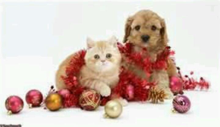 Merry Christmas Babies Cute Animals Pinterest