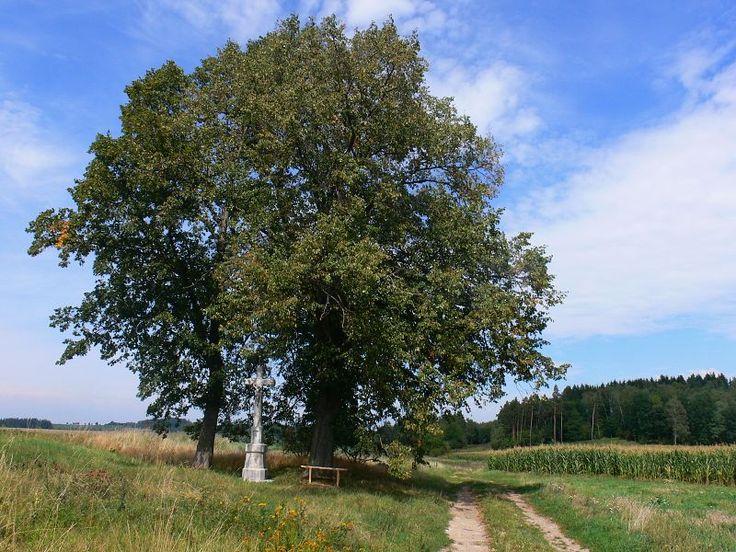 Muzeum České Sibiře, Arnoštovice, památný strom, lípa malolistá