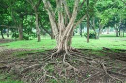 You must know how to remove tree roots without damaging the trees, as it can be a costly job if not done in the proper manner. The following article will tell you more about this.