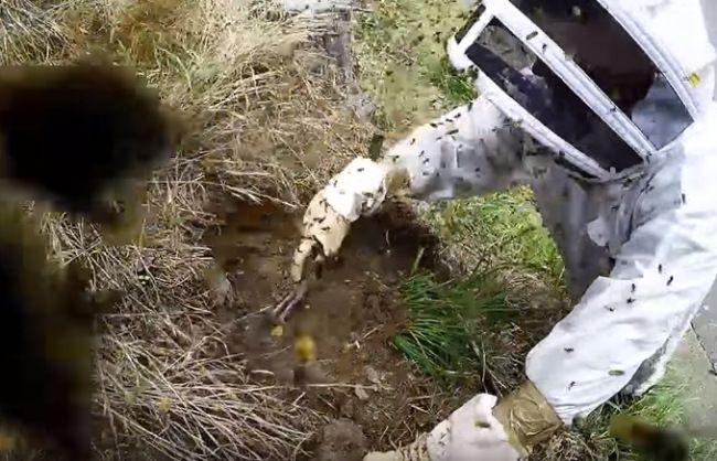 excavation d'un nid de guêpes allemandes [video] - http://www.2tout2rien.fr/excavation-dun-nid-de-guepes-allemandes-video/