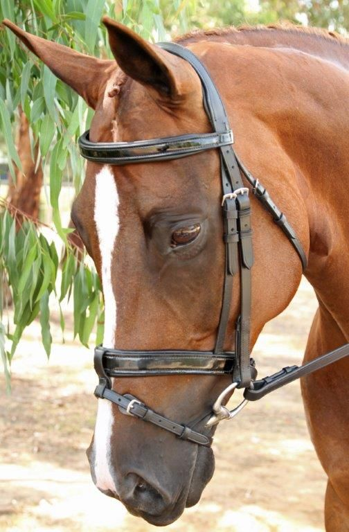 Equiwear Gel Padded Bridle $249.75 Available in Pony, Cob, Full and Warmblood www.equiwear.com.au admin@equiwear.com.au