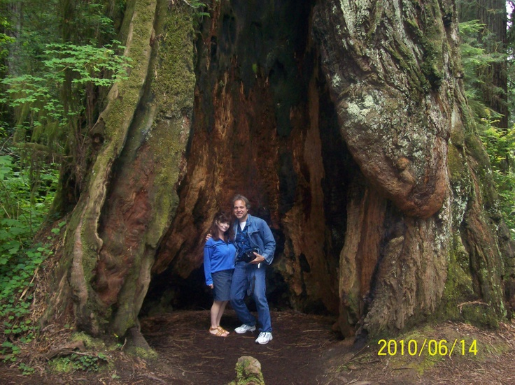 1000 Images About Redwood Forest Ca On Pinterest