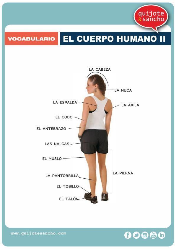 lamina para aprende vocabulario el cuerpo humano 2