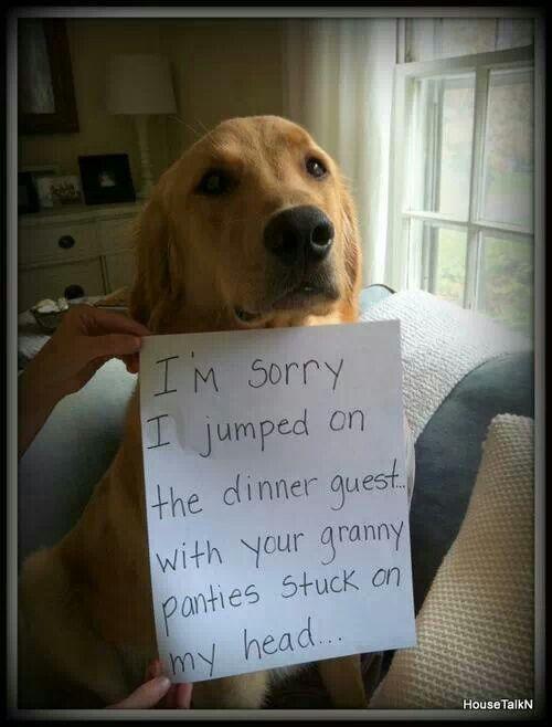 bahahahahaha!!!!!! Dog shame