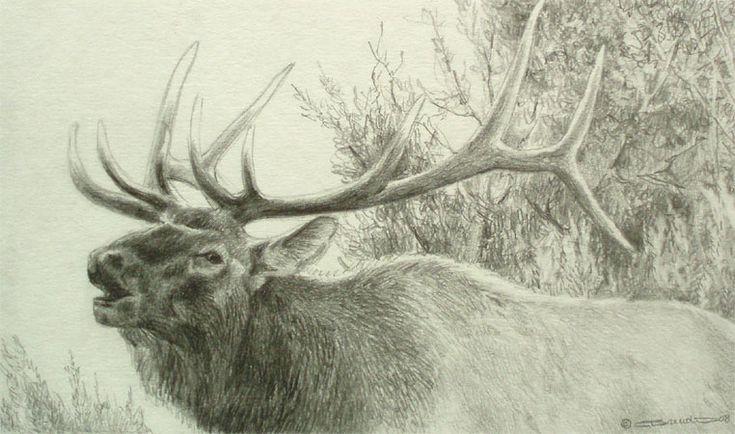 Bugling Elk - pencil drawing by Carl Brenders | Art ...