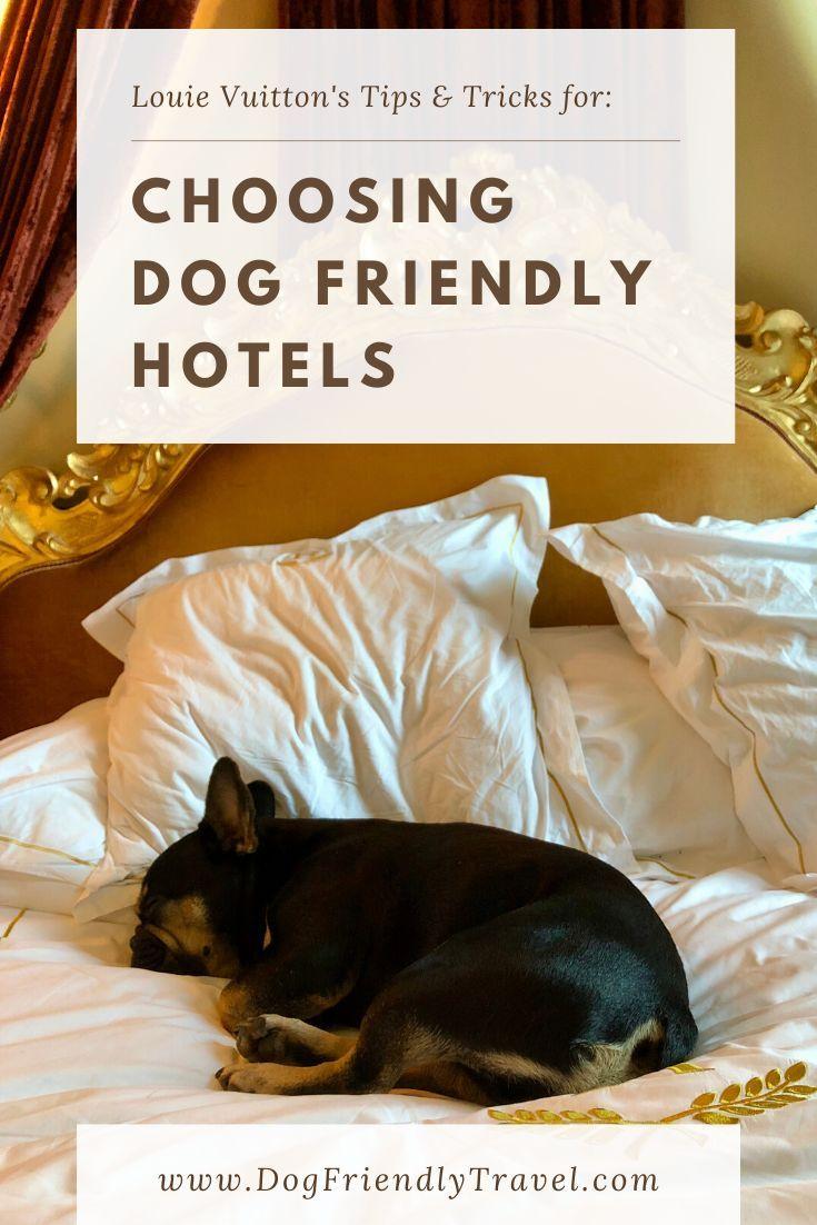 Choosing Dog Friendly Hotels In 2020 Dog Friendly Hotels Dog Friends Dog Friendly Vacation
