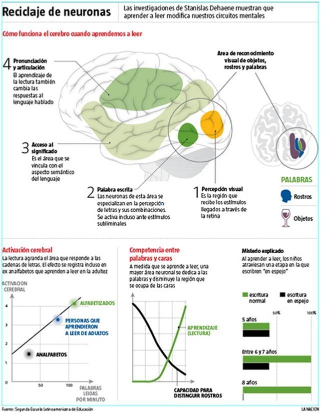 Pistas sobre cómo aprende el cerebro. Aconsejan sintonizar el horario de clases con los ritmos biológicos