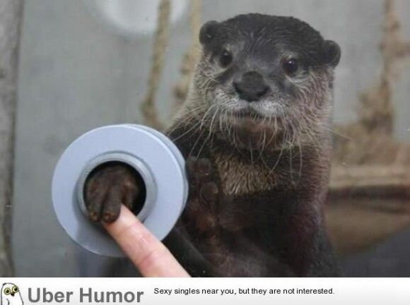 there is an aquarium where you can shake hands with otters.