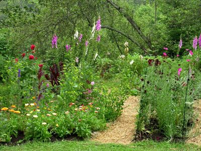 Seven Habits of Successful GardenersGardens Beds, 7 Habits, Gardens Paths, Organic Gardens Tips, Flower Gardens, Gardens Pest, Success Gardens, Organic Gardening Tips, Time Test Techniques
