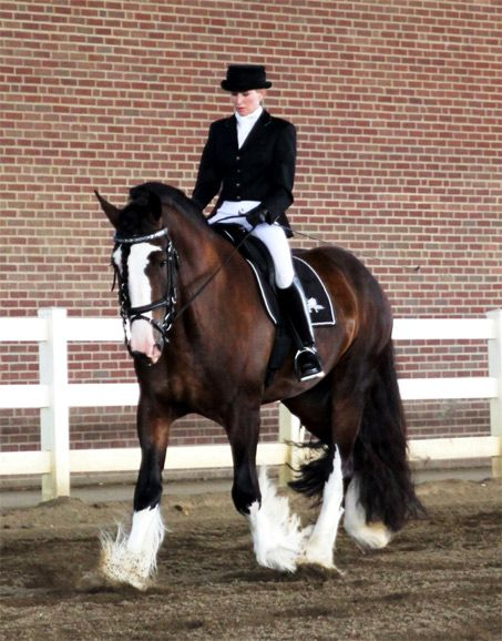 Mufasa X has a unique list of talents for a draft horse. He has been trained and promoted in Dressage, Sporthorse Disciplines and even Mounted Police work.