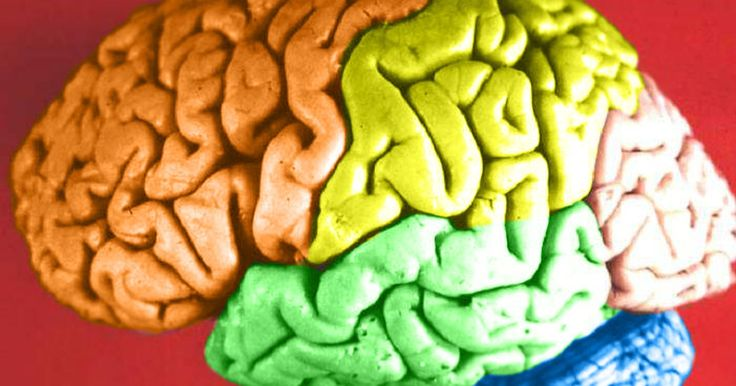 The cerebrum, which is the largest part of the brain, is divided into four areas, or lobes, each of which houses different functions. The cerebrum is also divided into two hemispheres: the right, which helps you think creatively and the left, which helps you think logically. Hence, you have a right-sided frontal lobe and a leftt-sided frontal lobe....