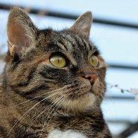 #dogalize Il coronavirus felino e la peritonite infettiva felina #dogs #cats #pets