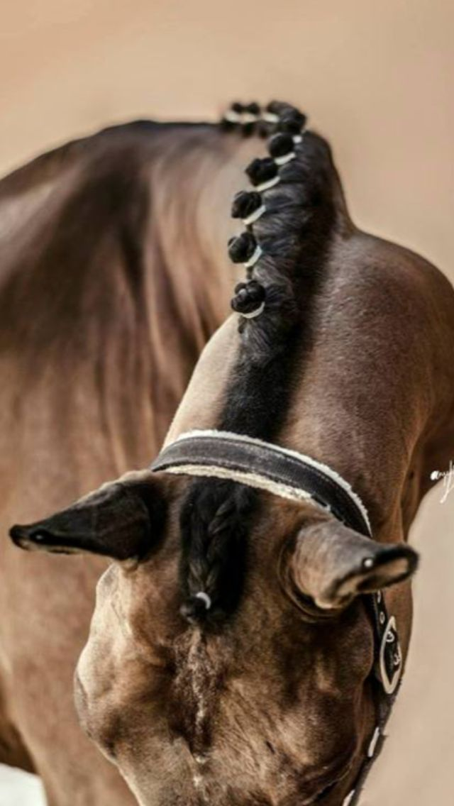www.pegasebuzz.com | Equestrian photography.