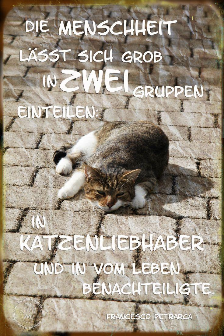 Süße Katzen Sprüche   Bnbnews.co