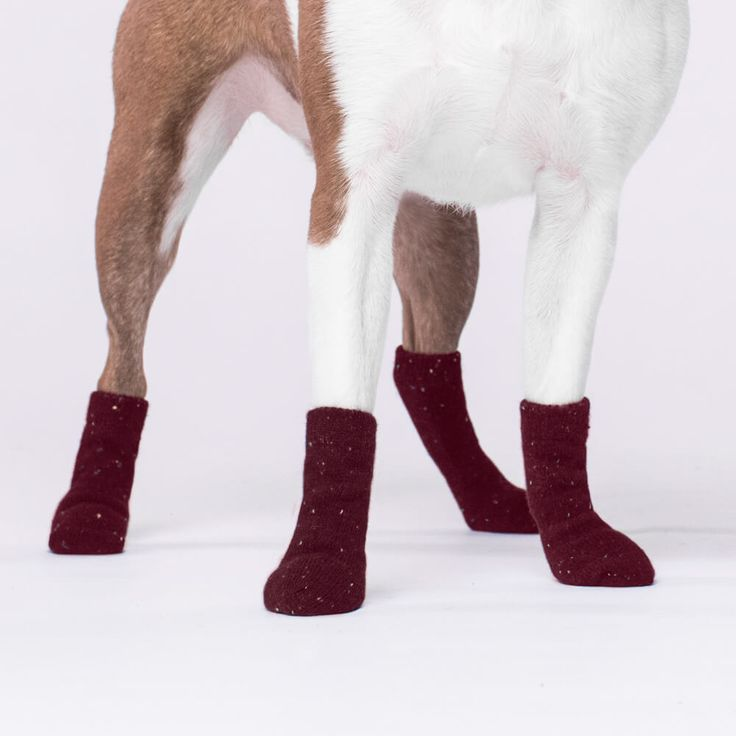 Canada Pooch Dog Socks in Maroon | The stylish cable-knit dog socks that keep all four paws toasty & trendy throughout the fall and winter