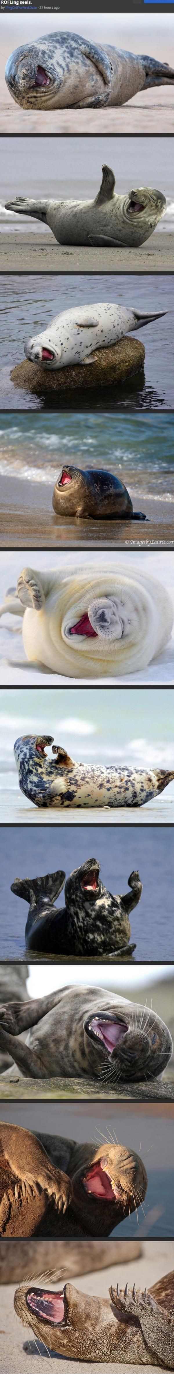 ROFLing seals These are what I imagine I look like when I'm loling!
