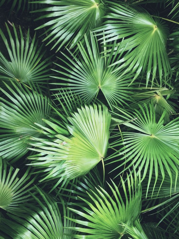 Palms | beatrizveros | VSCO