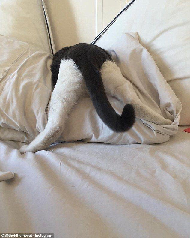 元気があり過ぎて5人の里親さんに見放された猫。今ではすっかり人気者に! (13枚)