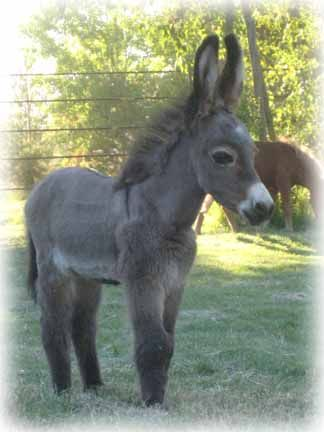 miniature horses and donkeys  Awwwwww!