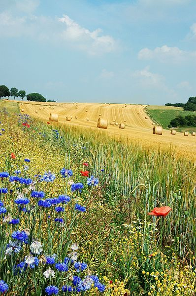 Summer in Belgium | See More Pictures | #SeeMorePictures