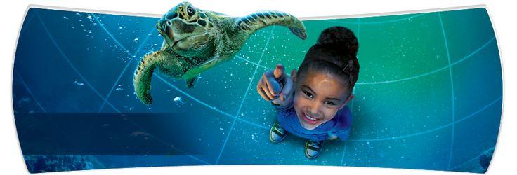 All New SeaWorld's TurtleTrek | SeaWorld Orlando