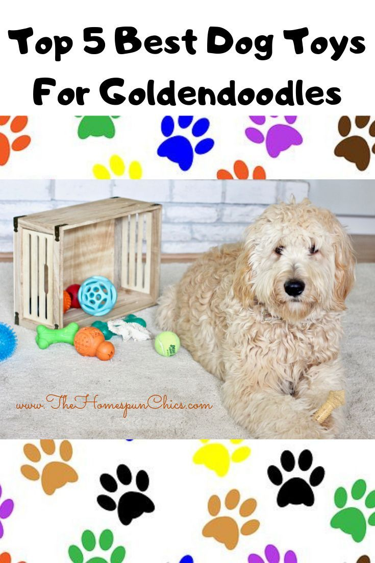 Top 5 Best Dog Toys For Goldendoodles The Homespun Chics Goldendoodle Best Dog Toys Dog Toys