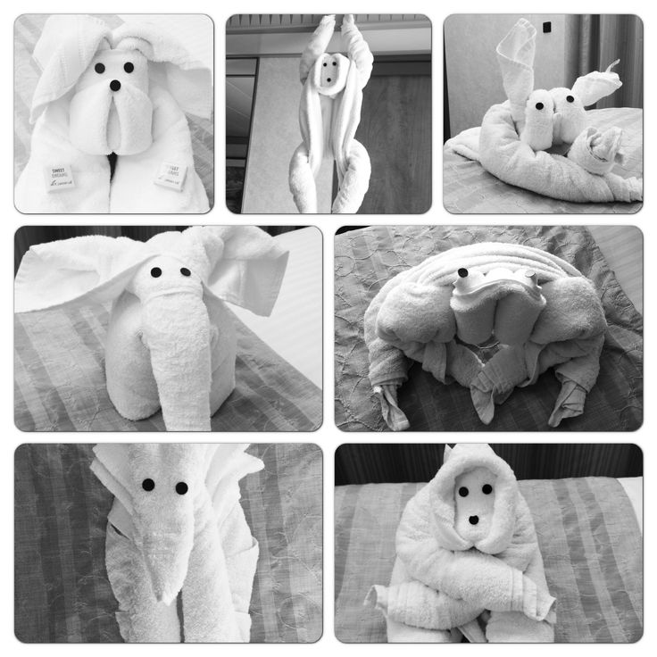 Towel animals - carnival cruise Oh how I miss coming back to see these in our cabins!