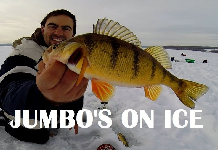 87 best images about ice fishing adventures on pinterest for Ice fishing for bass