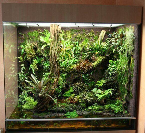 78 b sta bilderna om fish tank paludarium vivarium p for Small fish tank with waterfall