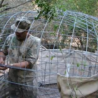 Deer Blinds From Cattle Panels