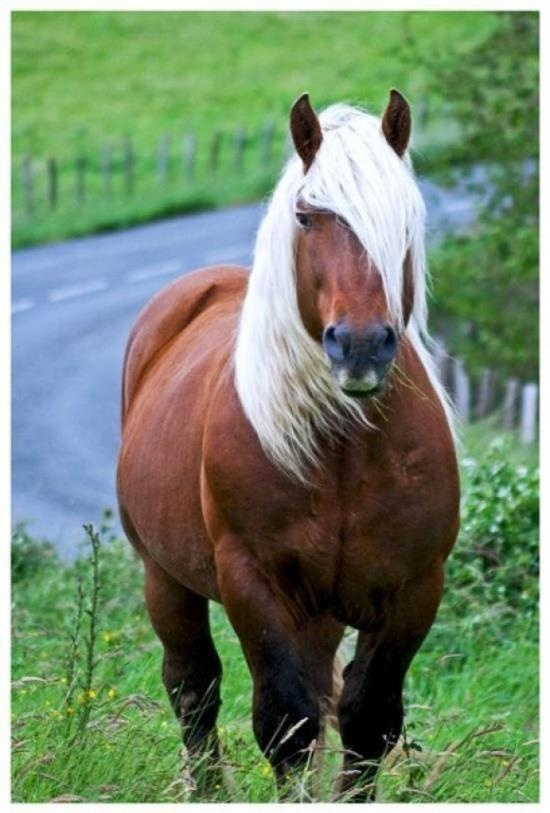 This is a beautiful horse and healthy looking!