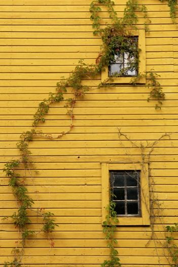 Country yellow. I love this color. I adore it.