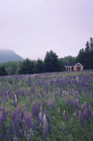 Mount Desert Island | 24 Reasons Everyone Should See Maine Before They Die