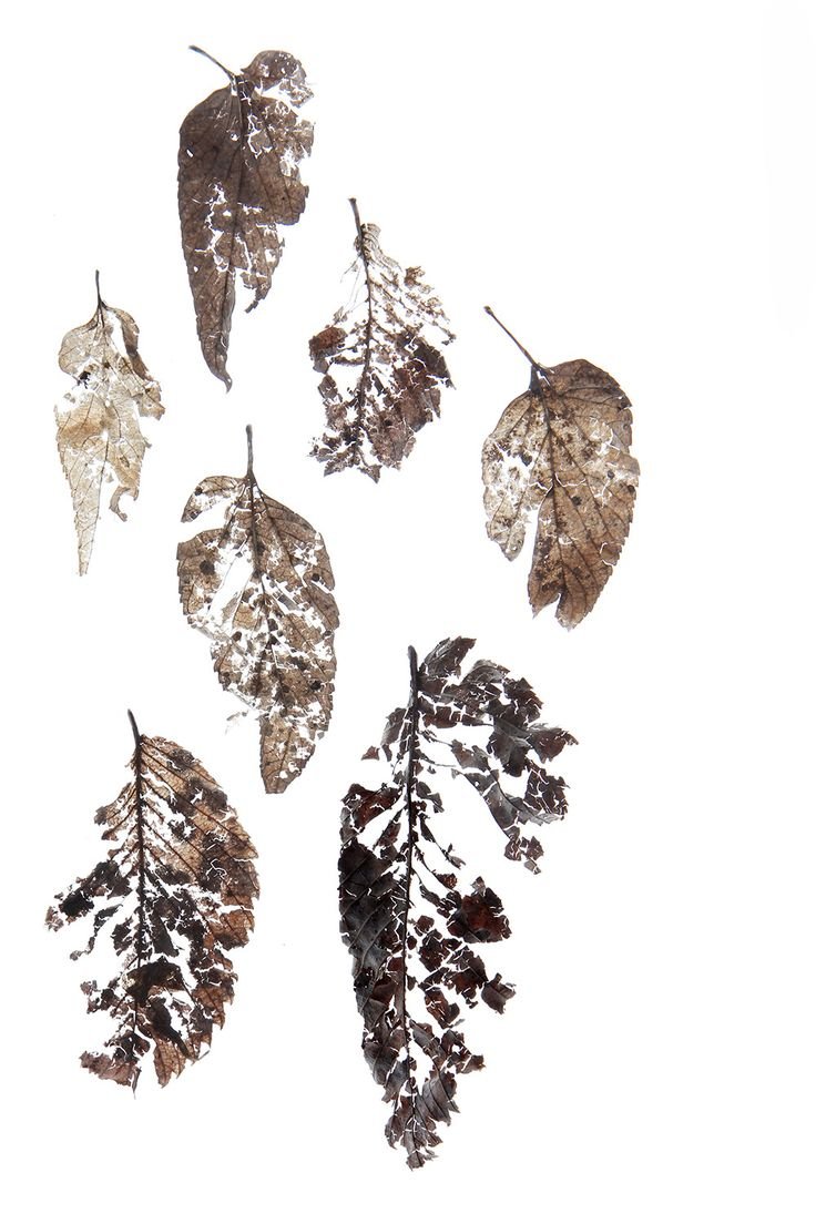 overwintered leaves (mary jo hoffman)