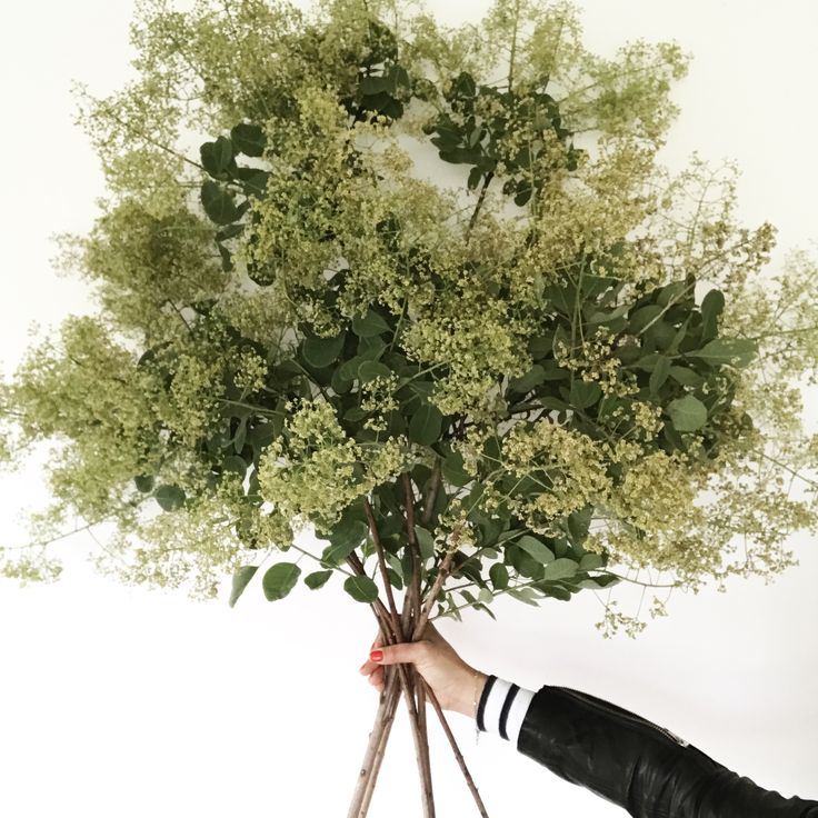 The feeling is good when you harvest an armful of smoke bush...#fleurs_de_mer